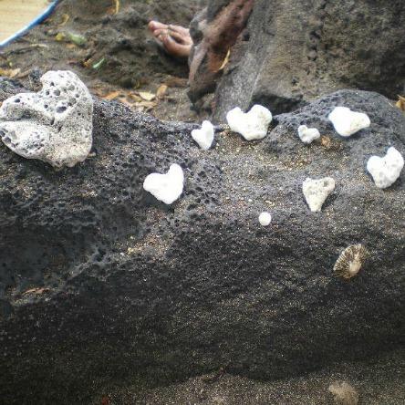 Hawaii hearts